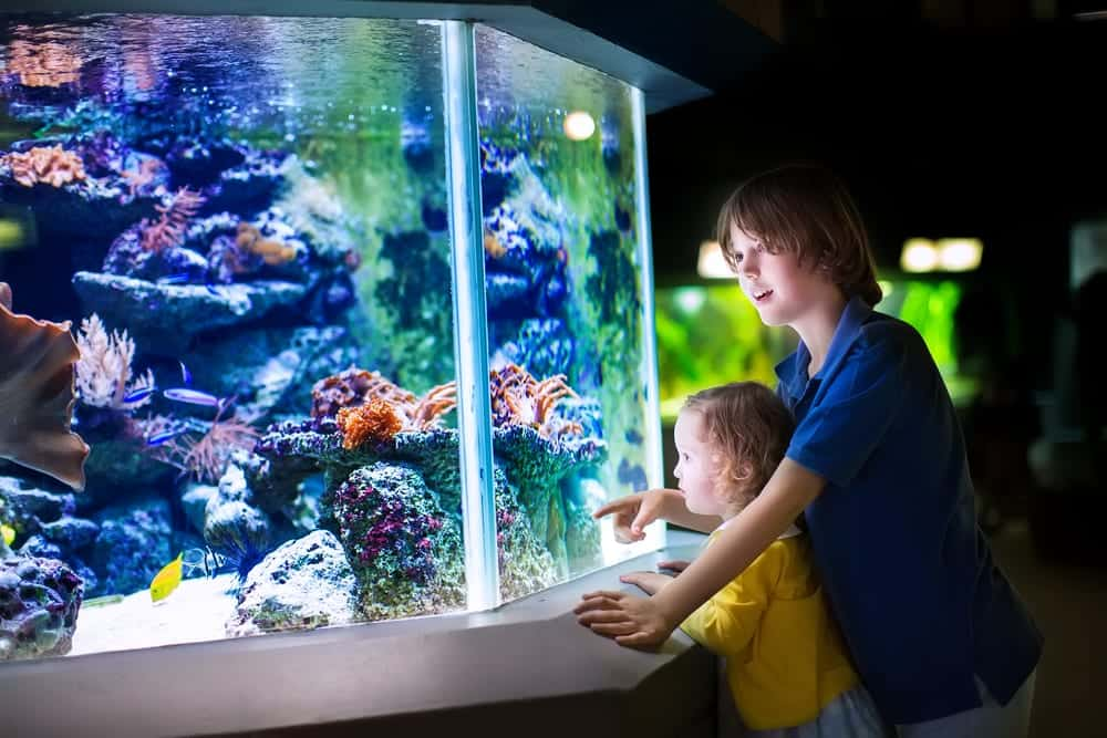 kids-at-the-aquarium
